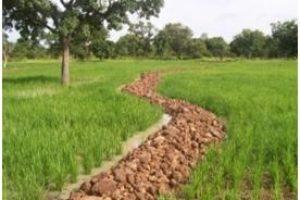 Etudes APD/DCE de 240 ha et contrôle des travaux de 440 ha de bas-fonds dans la basse et moyenne Vallée de l'Ouémé