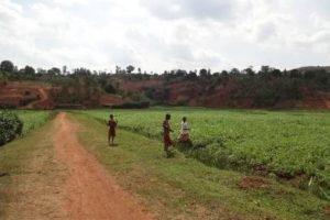 Études et contrôle des travaux d'aménagements des marais de Gisuma (250 ha) Narupfu (300 ha) et Nyamuswaga (400 ha)